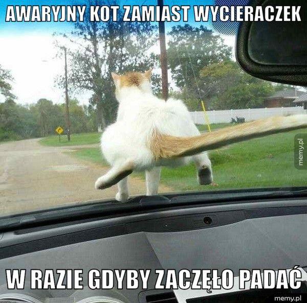 Awaryjny kot zamiast wycieraczek  w razie gdyby zaczęło padać