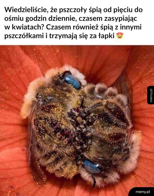 Słodkie pszczółki