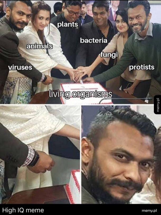 High IQ Meme