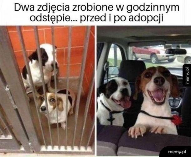 Adopcja jest super