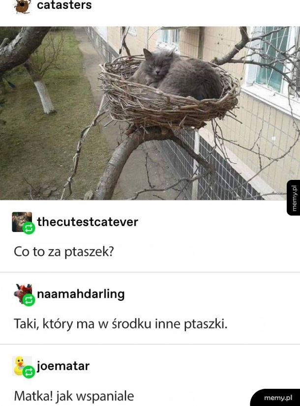 Jaki śliczny ptaszek