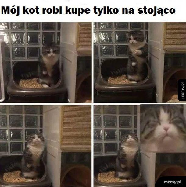 Dziwny jakiś ten kot