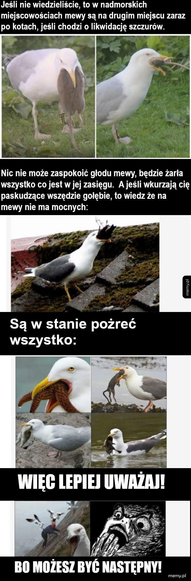 Pozyteczne ptaki to mewy