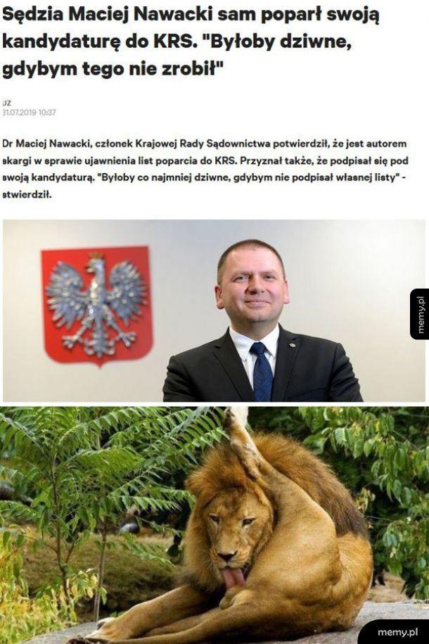 Sędzia jak lew...