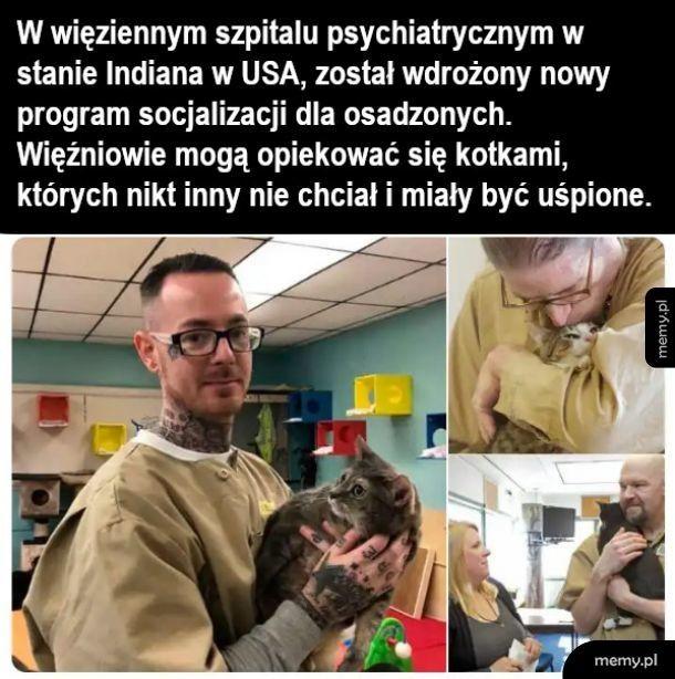 Leczenie kotem