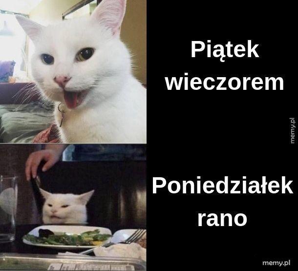 Kotowy weekend