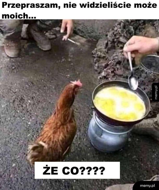 Szok dla kury