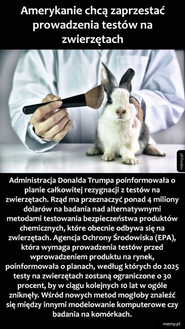 Testowanie na zwierzętach
