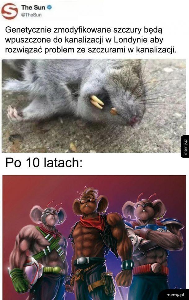 Szczury kontra szczury