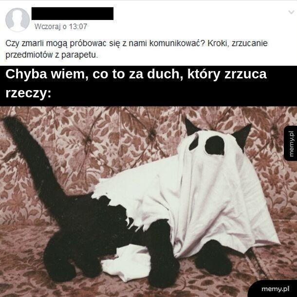 Kotełgeist