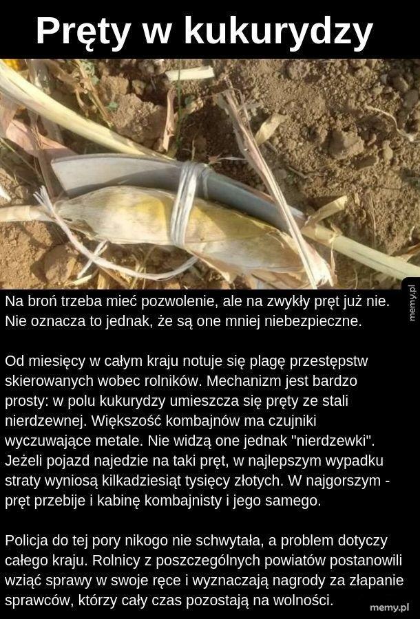 Pręty w kukurydzy