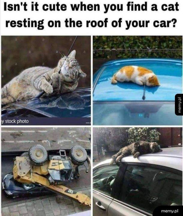 Cat... znaczy kot