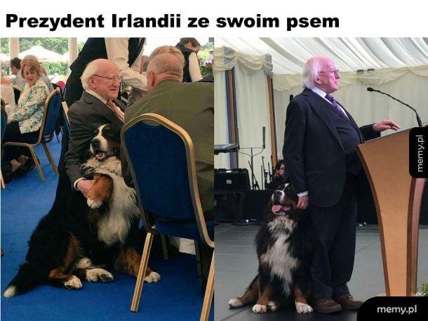 Prezydent Irlandii