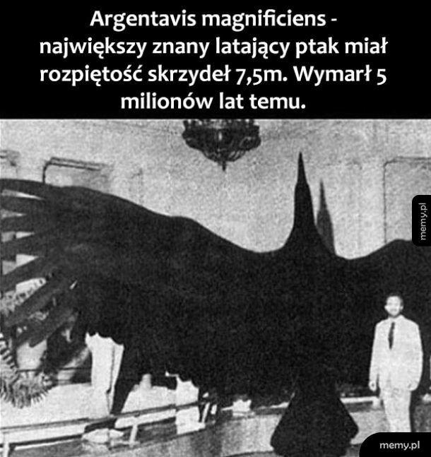 Największy ptak
