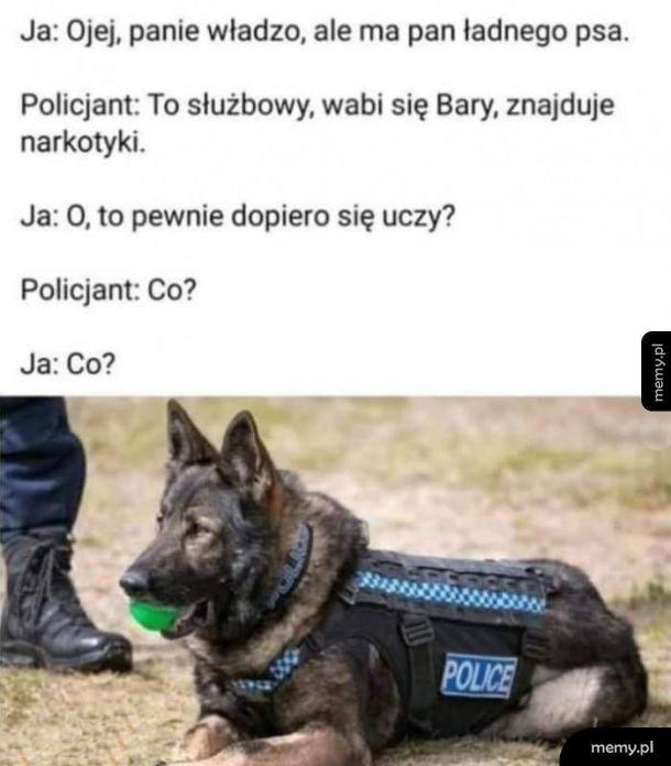 Pieseł  policyjny
