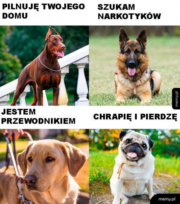 Psie zadania