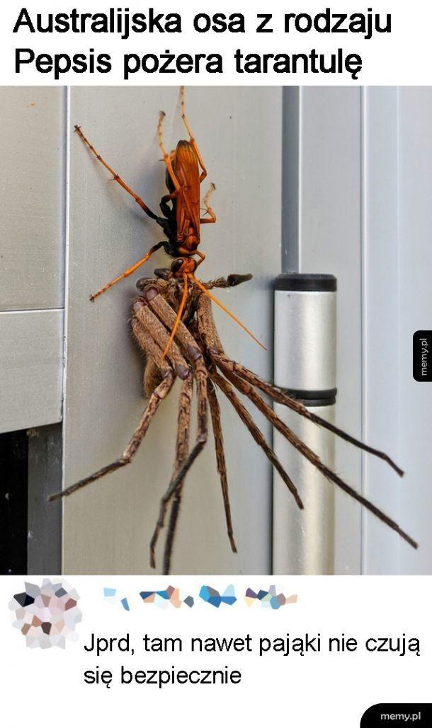 Nawet pająki...