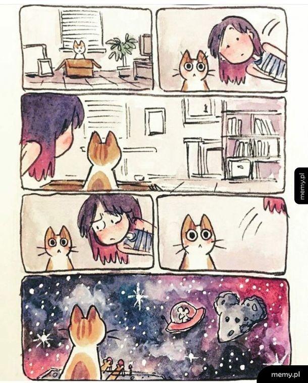 Świat koteła