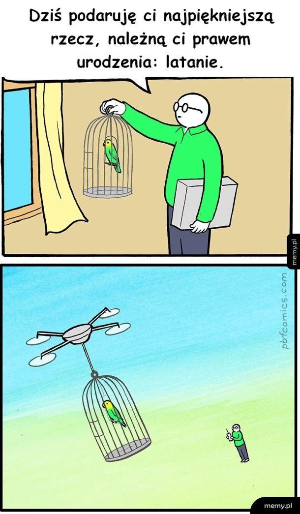 Leć niczym sokół