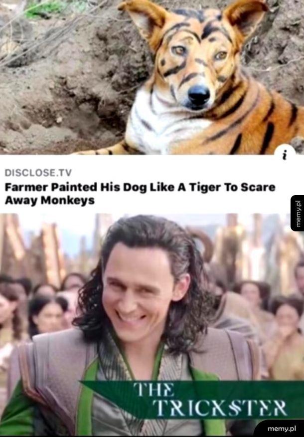 Loki is bae