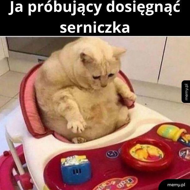 Tak na serio to nie jestem kotem. Tak na serio to jestem głupi.