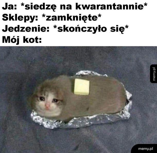 Pieczeń z kota