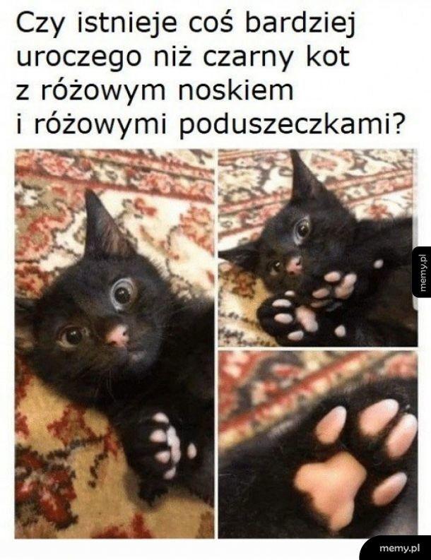 Uroczy kot