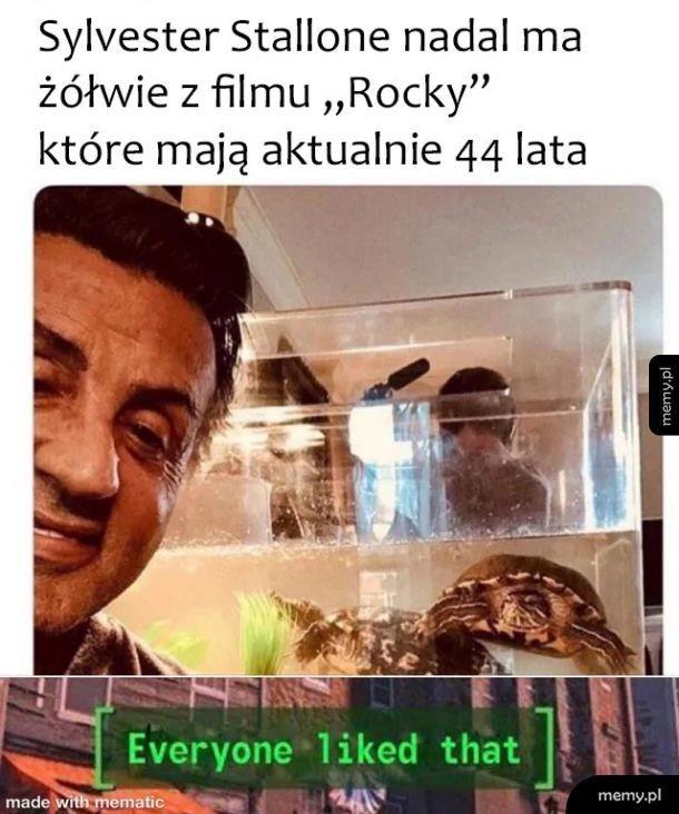 Sławne żółwie