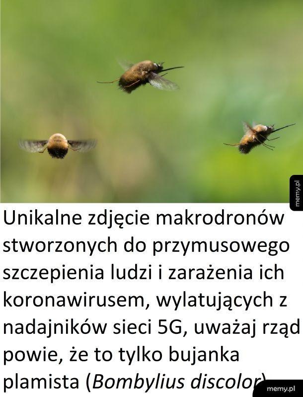 Makrodrony