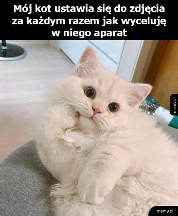 Koteł