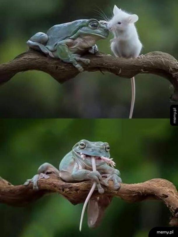 Nie wszyscy są twoimi przyjaciółmi...