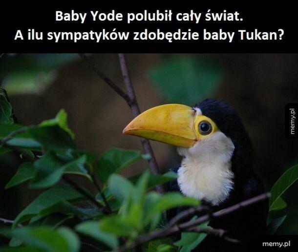 Baby Tukan