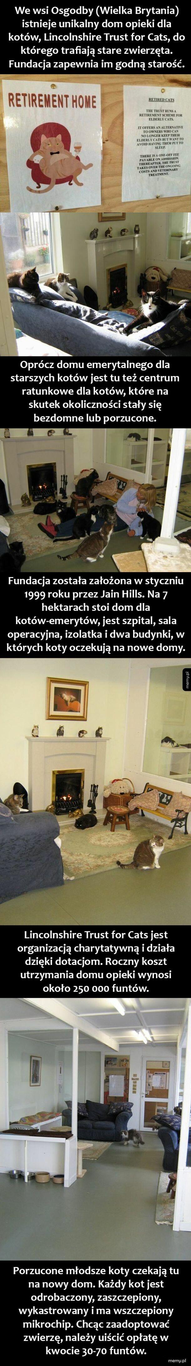 Koci dom