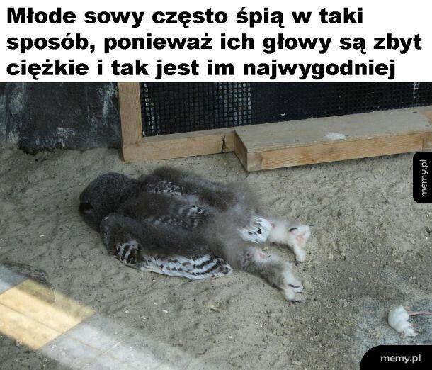 Sówka