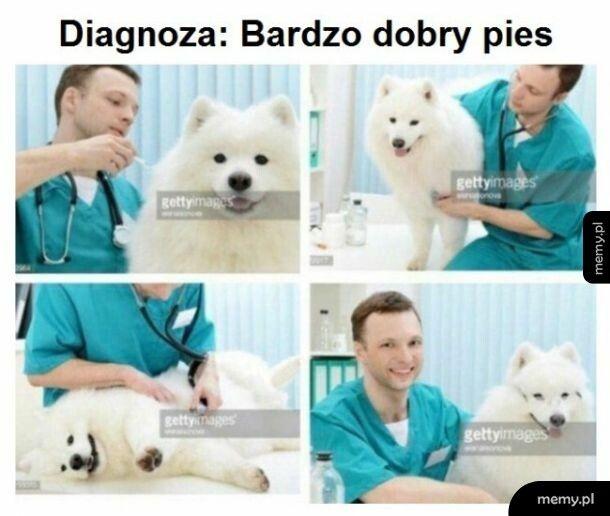 Diagnoza