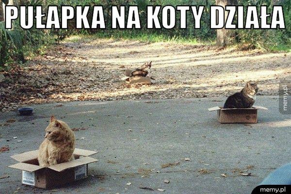 Pułapka na koty działa