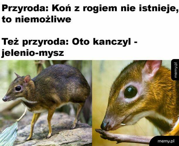 Jelenio-mysz