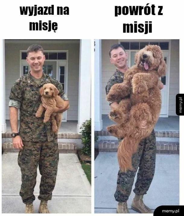 Pies i żołnierz