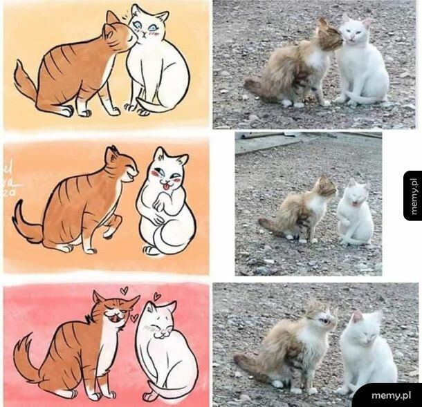 Koteły