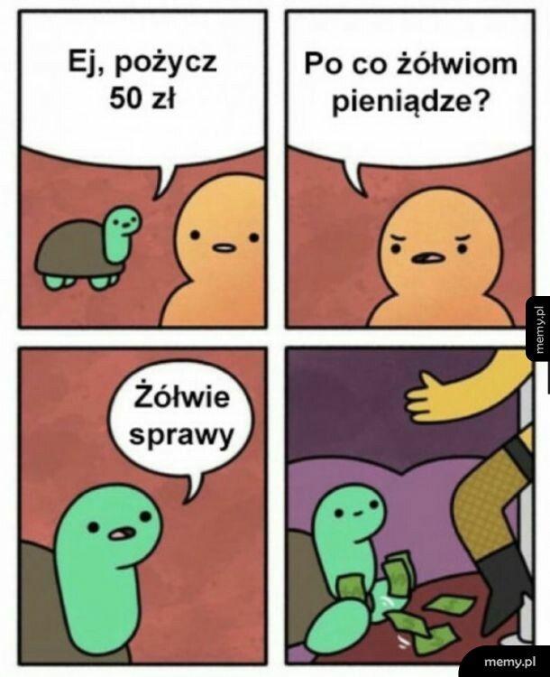 Żółwie sprawy