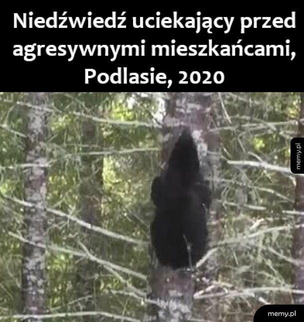 Tymczasem na Podlasiu