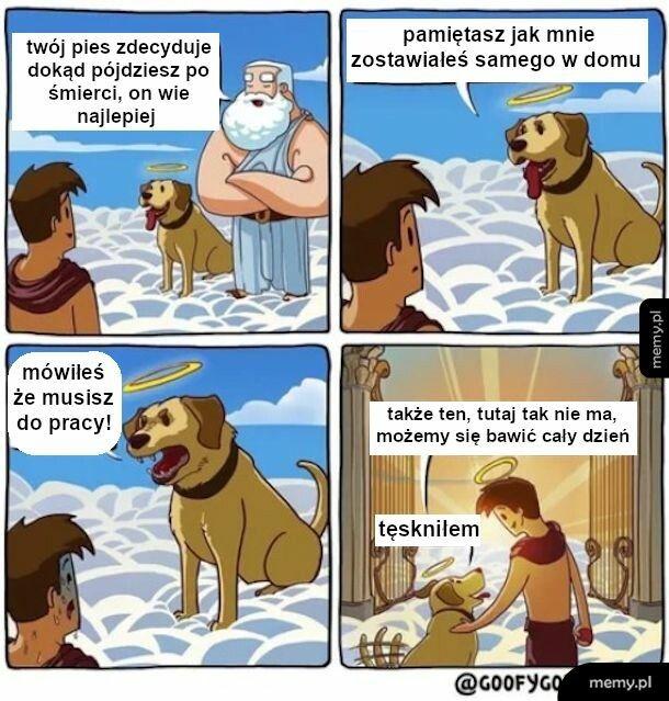Pies wyrocznia