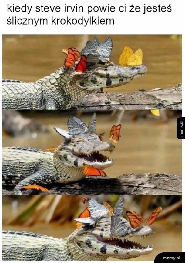 Motylki i radośc