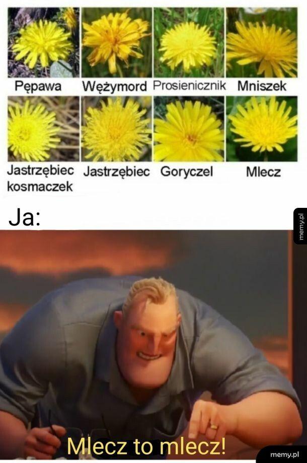 Mlecz