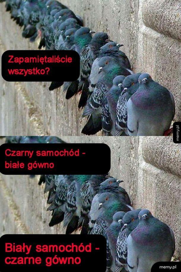 Zmowa gołębi