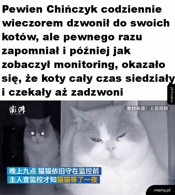 Kochane koty