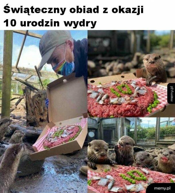 Urodziny wydry
