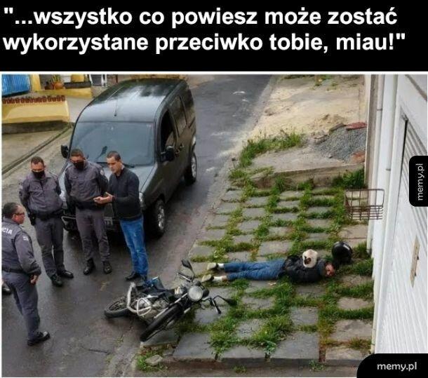 Kot policyjny