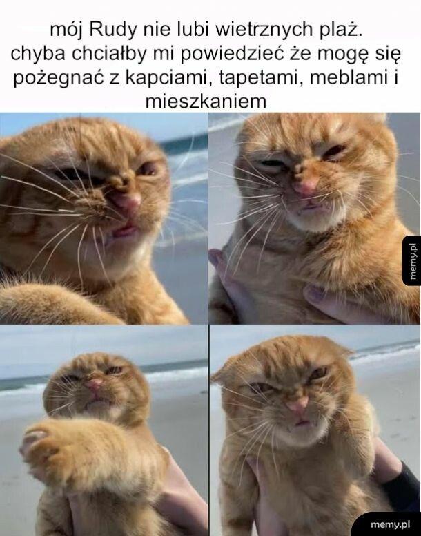 Zły kot mocno