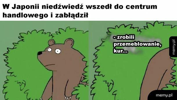 Biedny niedźwiedź